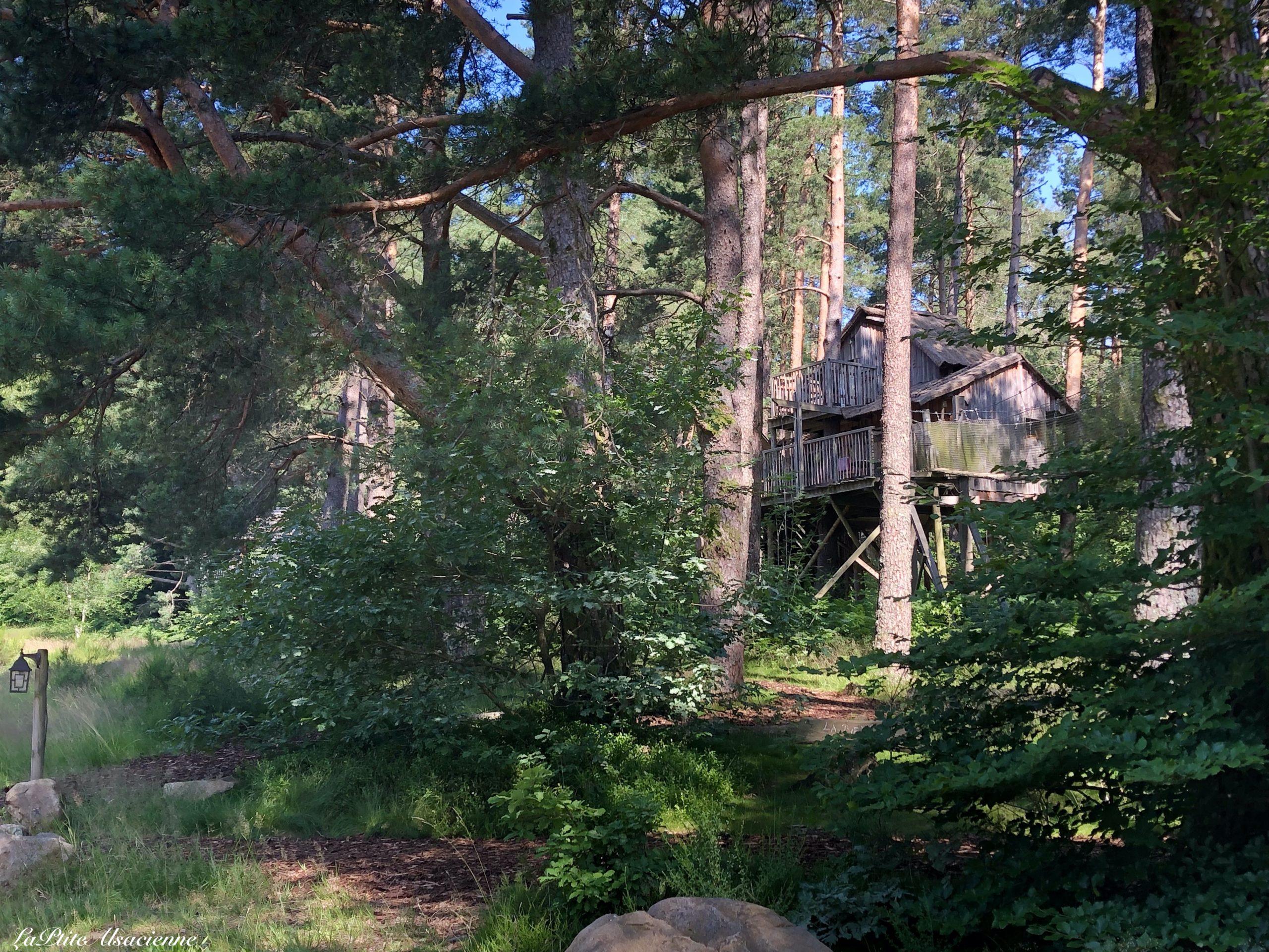 A l'entrée des Nids des Vosges, Cabane dans les arbres. Photo de Cendrine Miesch dite  LaPtiteAlsacienne