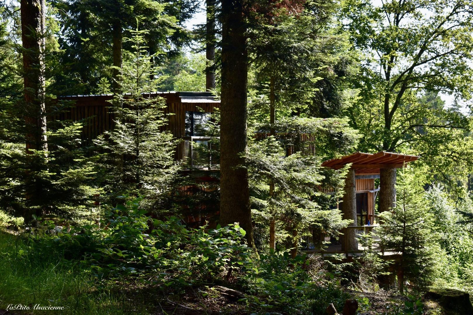 Vue sur Cabanes insolites au Nids des Vosges à Champdray