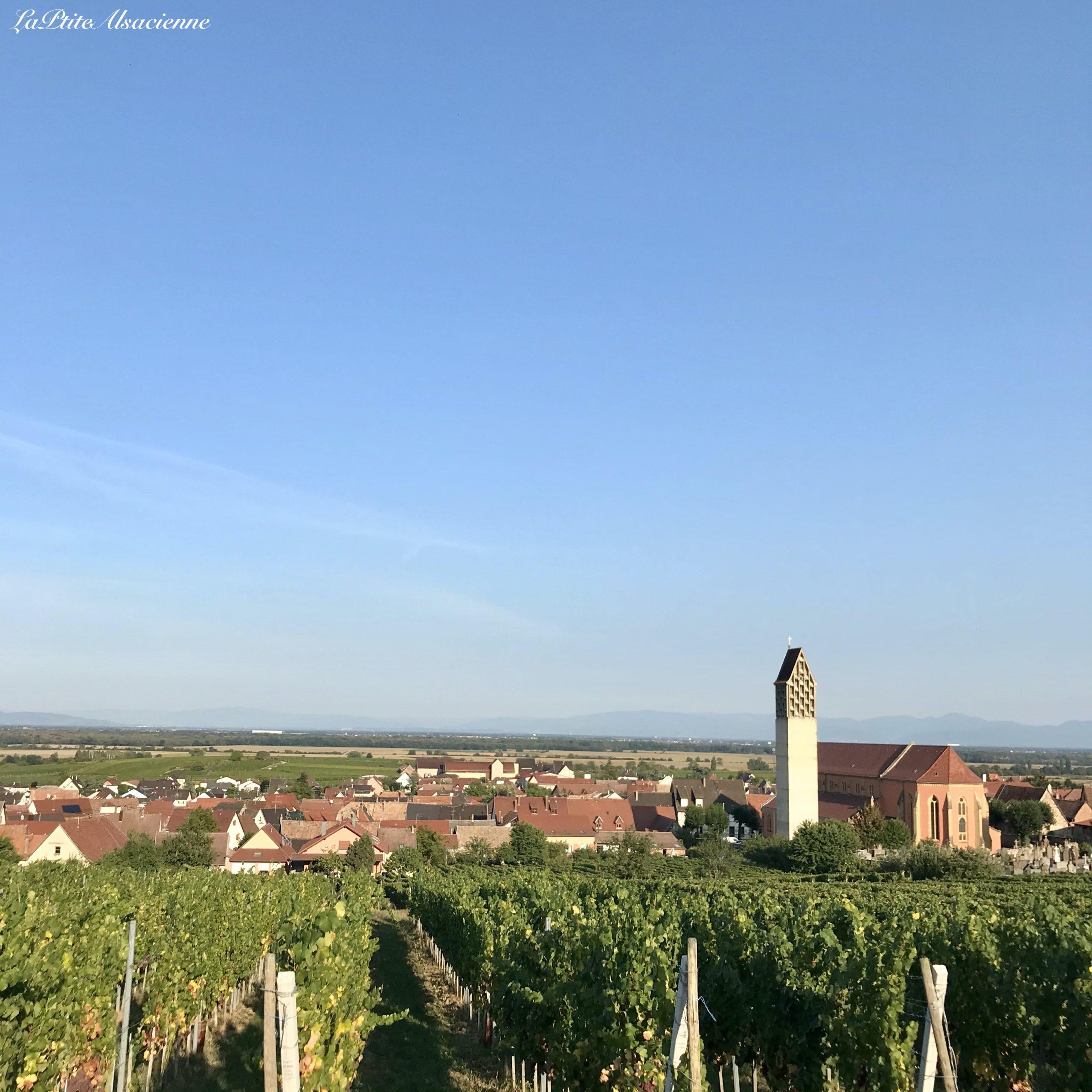 Vue sur Pfaffenheim depuis le vignoble - Photo par Cendrine Miesch 2020